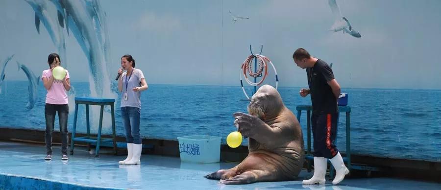新澳海底世界 海豚表演馆 - 秦皇岛 - 北戴河旅行社